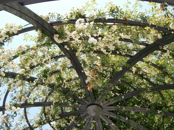 花博記念公園の風景写真3-4