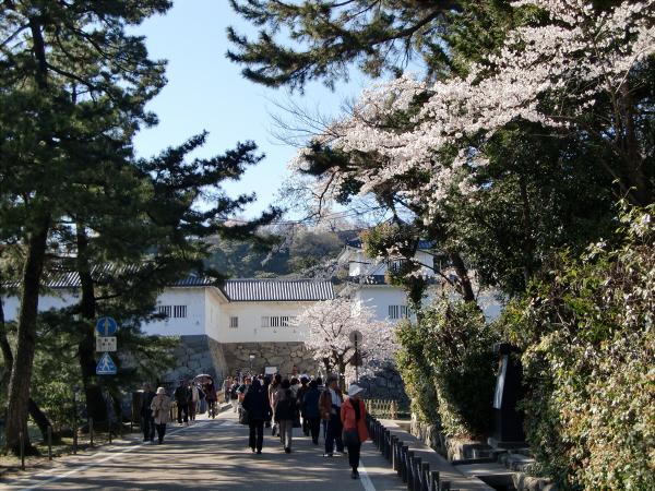 桜・ひこにゃん・彦根城1-2