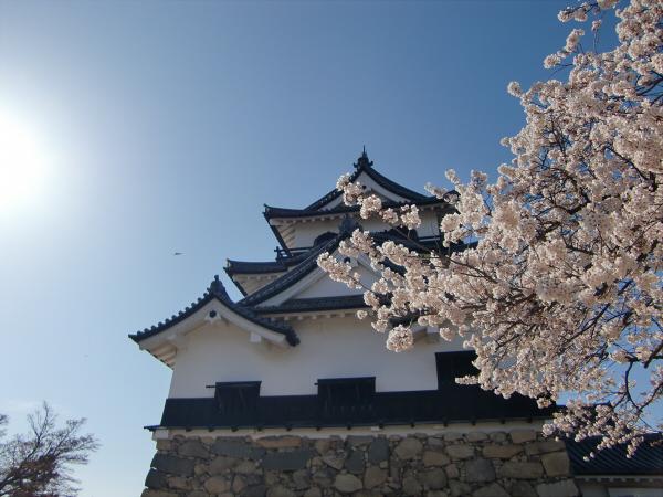 桜・ひこにゃん・彦根城2-1