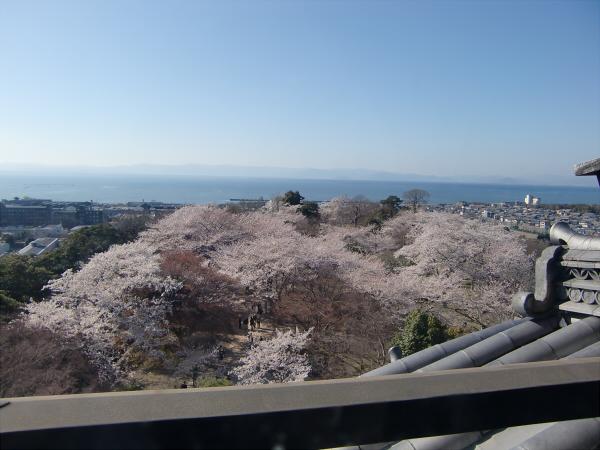 桜・ひこにゃん・彦根城2-3
