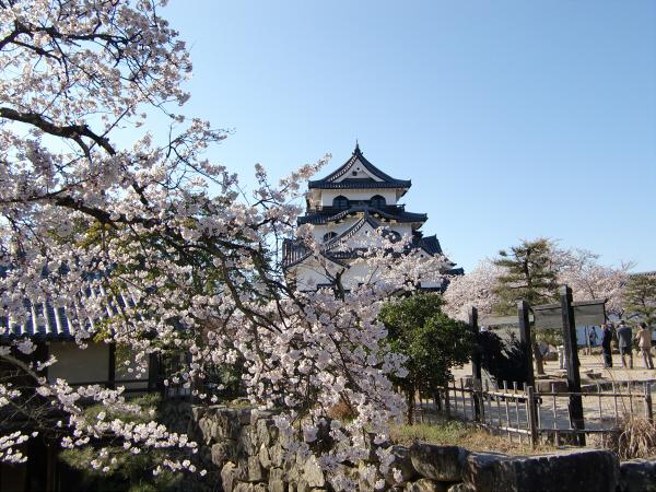 桜・ひこにゃん・彦根城2-5