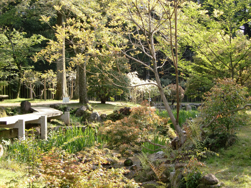 春日大社-神苑-の藤などの写真04