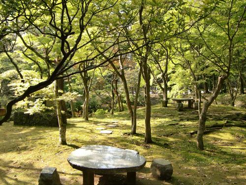 春日大社-神苑-の藤などの写真05