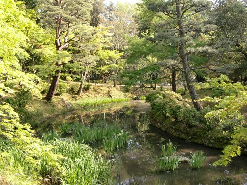 春日大社-神苑-の藤などの写真06