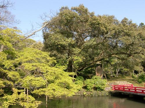 春日大社-神苑-の藤などの写真07