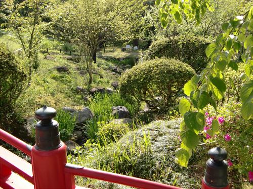 春日大社-神苑-の藤などの写真08