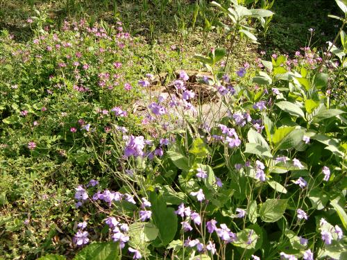 春日大社-神苑-の藤などの写真12