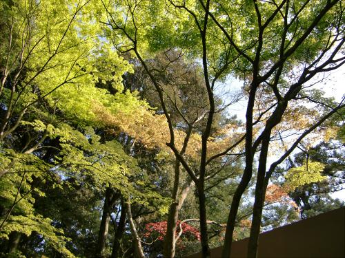 春日大社-神苑-の藤などの写真14