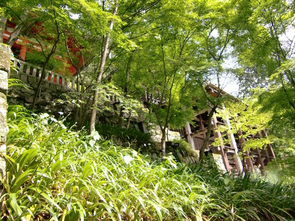京都清水寺周辺で撮った写真3-1