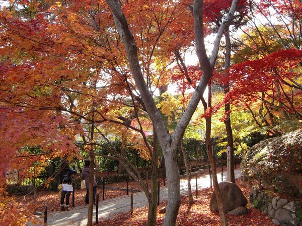 京都光明寺の紅葉03