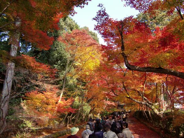 京都光明寺の紅葉10