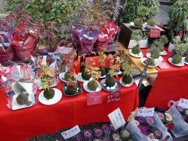 京都光明寺の紅葉13