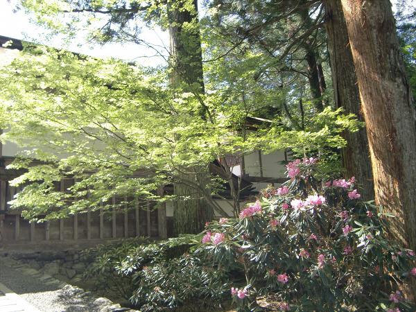 高野山で撮った写真1-12