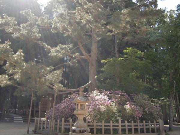 金剛峯寺の写真2-04