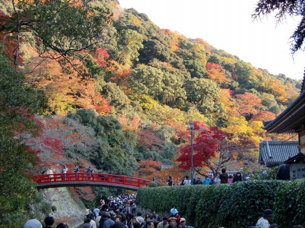 大阪箕面の紅葉08