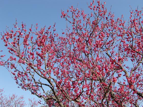 百舌鳥大仙公園の日本庭園06