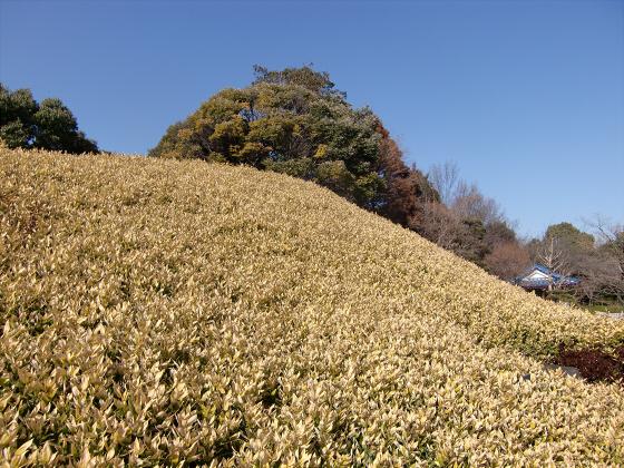 百舌鳥大仙公園の日本庭園09