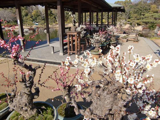 百舌鳥大仙公園の日本庭園12
