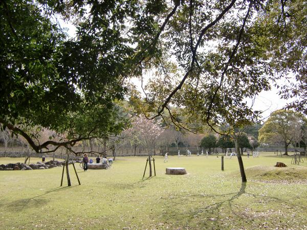 奈良公園で桜と鹿見物1-4