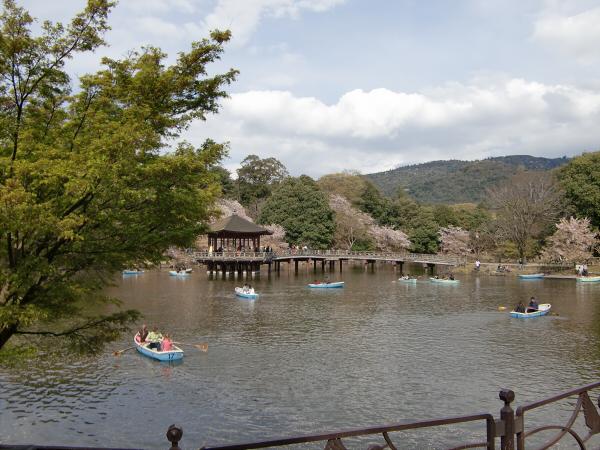 奈良公園で桜と鹿見物1-5