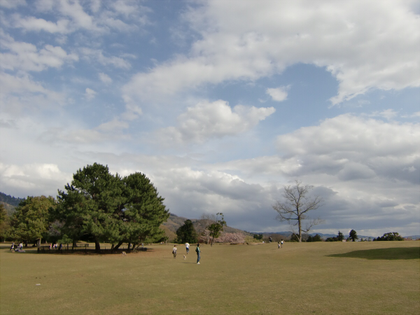 奈良公園で桜と鹿見物1-6
