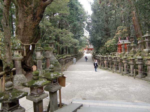 奈良公園で桜と鹿見物2-5