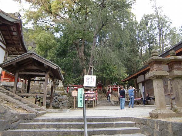 奈良公園で桜と鹿見物2-6