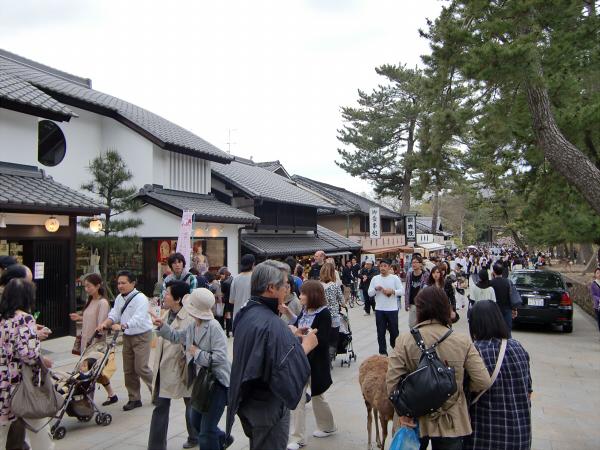 奈良公園で桜と鹿見物3-1