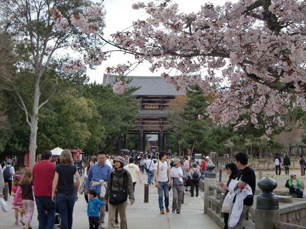 奈良公園で桜と鹿見物3-2