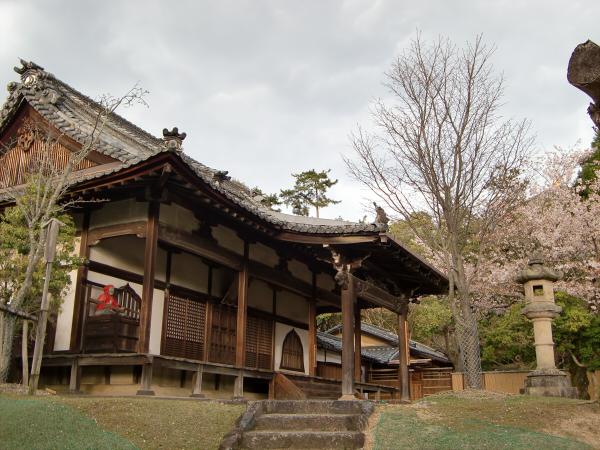 奈良公園で桜と鹿見物3-6
