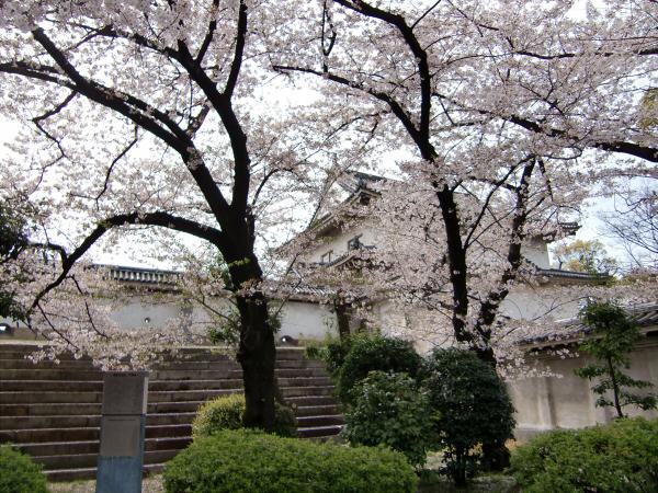 大阪城西の丸庭園の桜の写真2