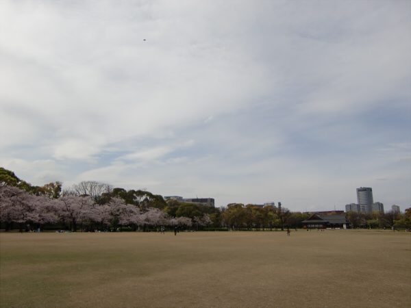 大阪城西の丸庭園の桜の写真3