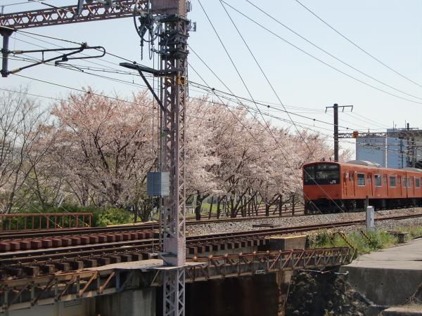 桜とJRの写真1