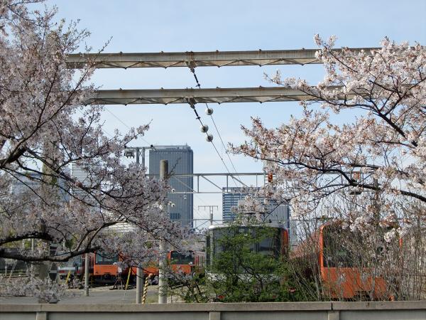桜とJRの写真4