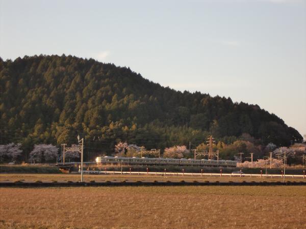 桜とJRの写真6