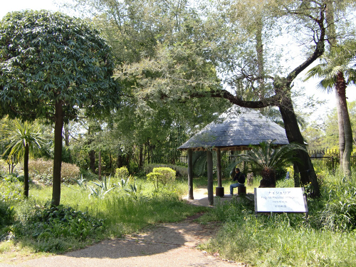 花博記念公園世界の樹01