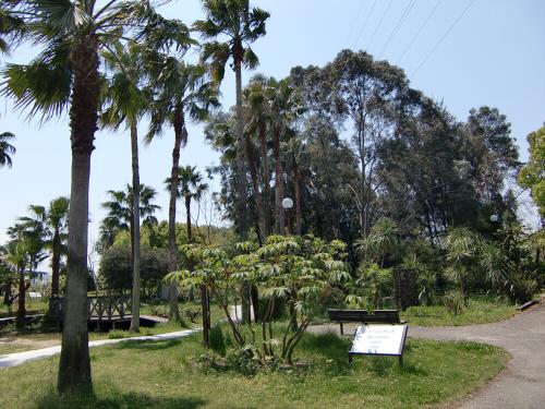 花博記念公園世界の樹02