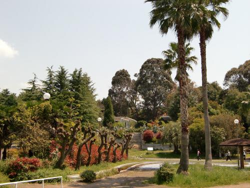 花博記念公園世界の樹03