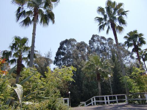 花博記念公園世界の樹04
