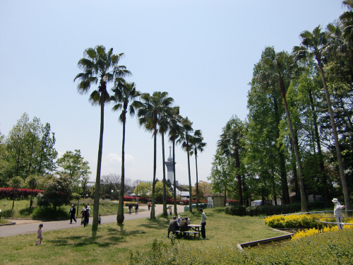 花博記念公園世界の樹05