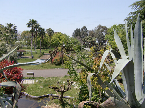 花博記念公園世界の樹06