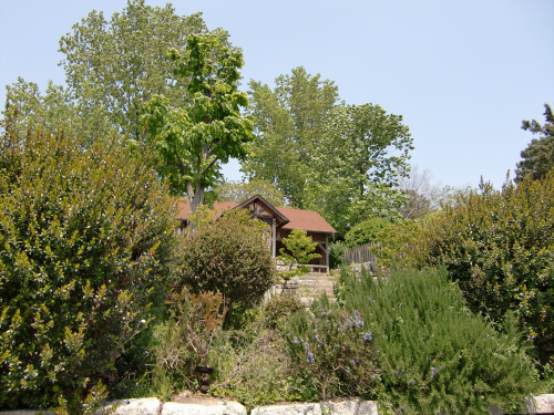 花博記念公園世界の樹10