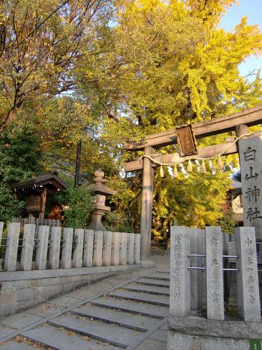 白山神社の大銀杏と祭り01