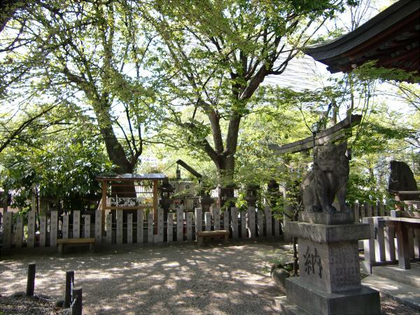 白山神社の大銀杏と祭り05
