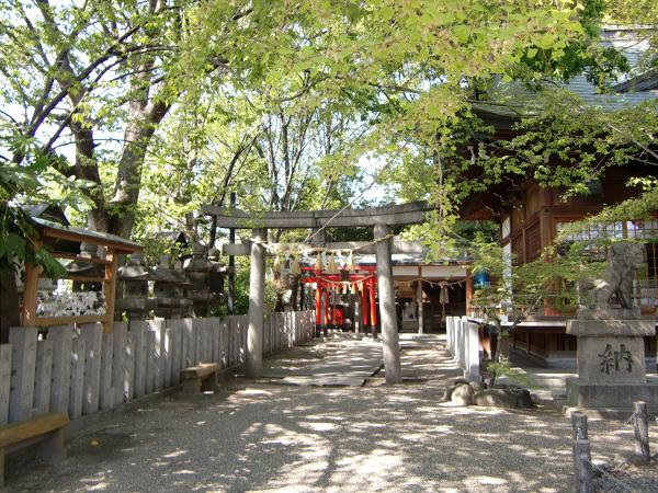 白山神社の大銀杏と祭り06