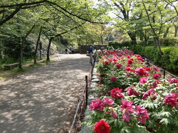 和歌山城でブラブラ散策した写真3-1