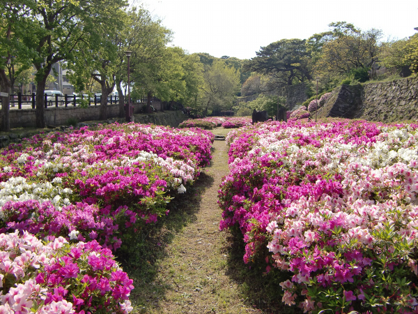 和歌山城でブラブラ散策した写真3-2