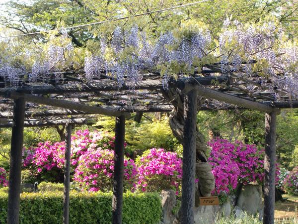 和歌山城でブラブラ散策した写真3-5