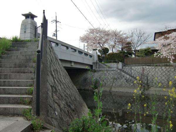 淀川河川公園背割堤地区の桜1