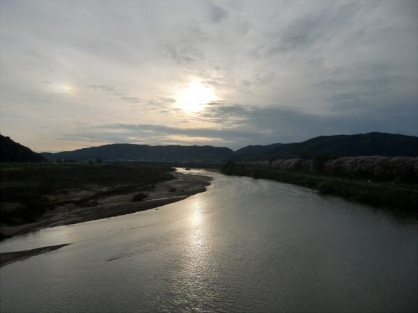 淀川河川公園背割堤地区の桜6